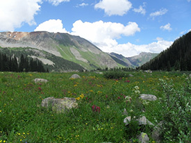 A favorite wildcrafting spot in the San Juan Mountains of Southwest Colorado.